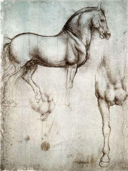 study-of-horse