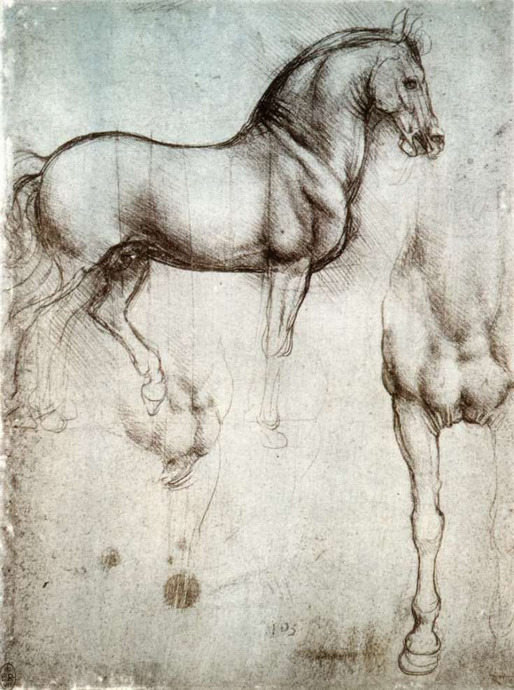 study-of-horse